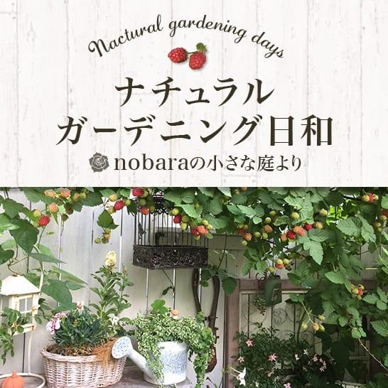 ナチュラルガーデニング日和 ~nobaraの小さな庭より~
