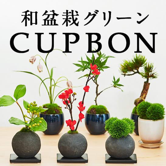 CUPBON 和盆栽グリーン特集
