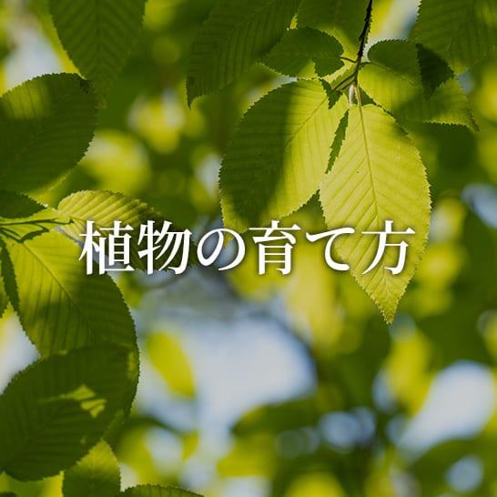 【植物図鑑】初心者さんでも失敗しない植物の育て方・栽培方法