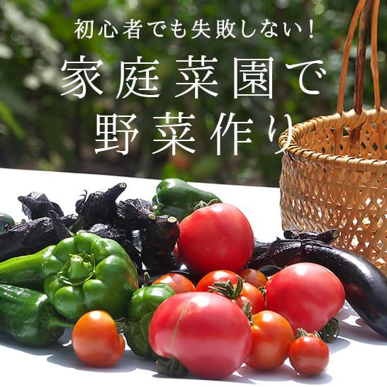 編集部からのおすすめ<br/>家庭菜園特集