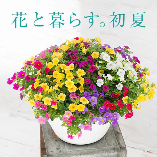 花と暮らす。初夏