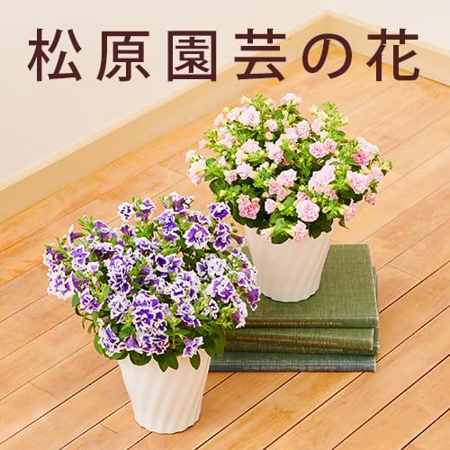 松原園芸の花