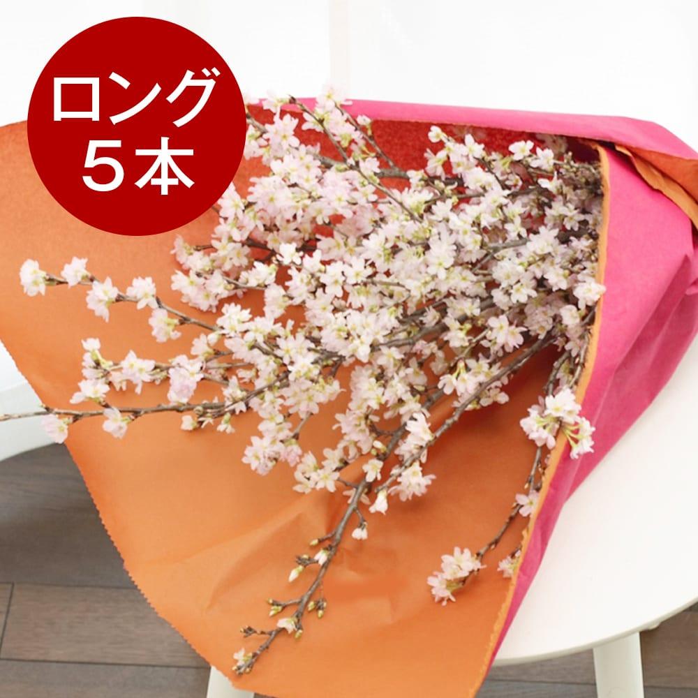 山形からの春便り啓翁桜(ロングサイズ)5本