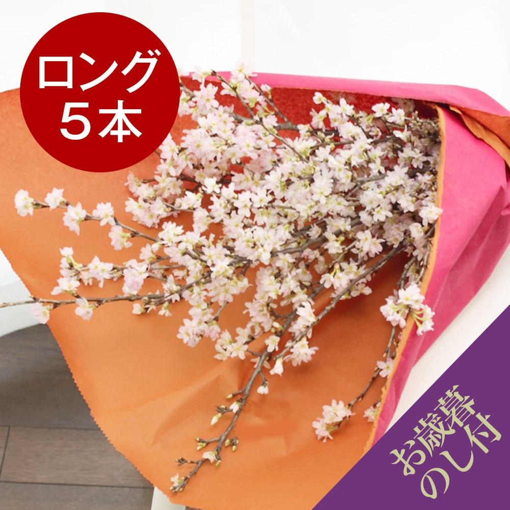 山形からの春便り啓翁桜(ロングサイズ)5本【お歳暮のし付き】