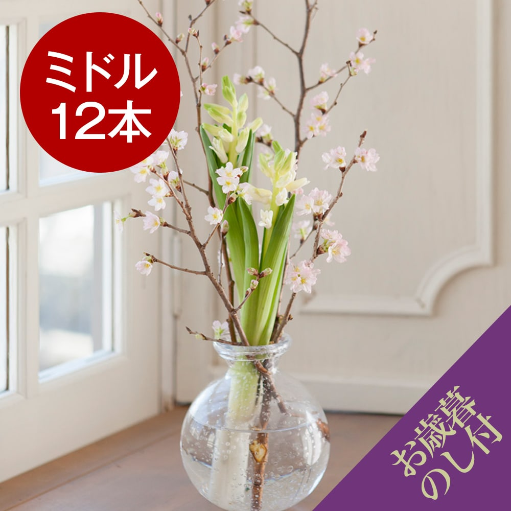 山形からの春便り啓翁桜(ミドルサイズ)12本【お歳暮のし付き】