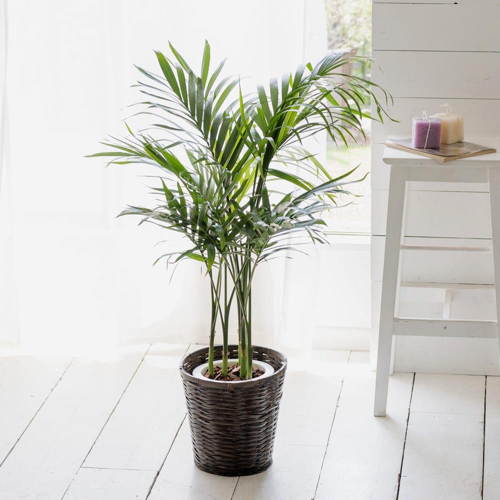 心を落ち着ける観葉植物を置く