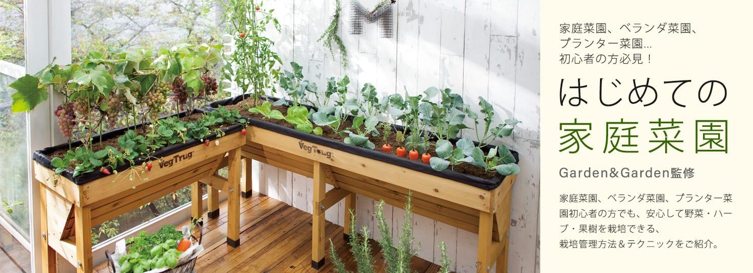 はじめての家庭菜園