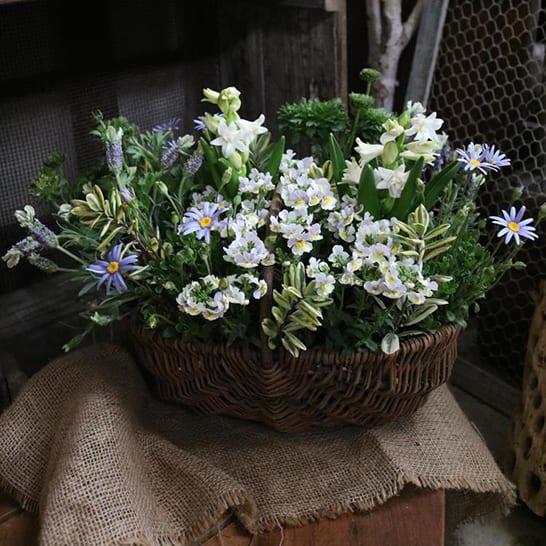 『ありがとう!』春の香りいっぱいのかごの寄せ植え
