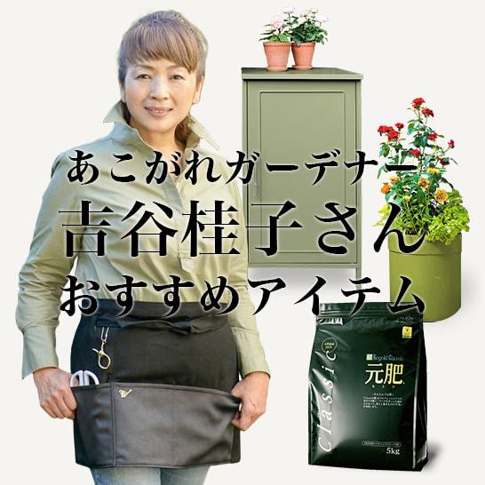 吉谷桂子さんおすすめガーデンアイテム
