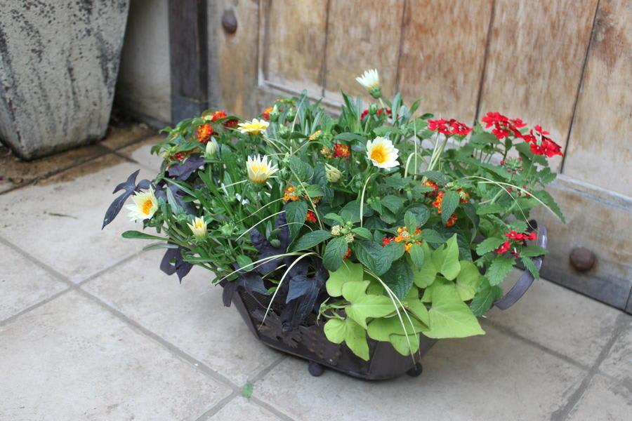 夏を乗り切る!元気な夏の寄せ植え