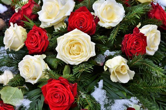 赤と白のバラ