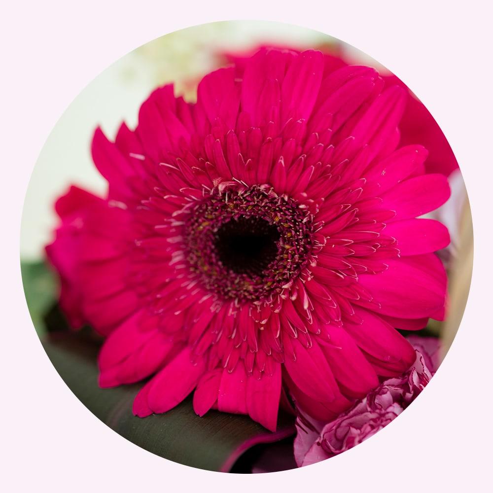 ガーベラの花言葉「希望」