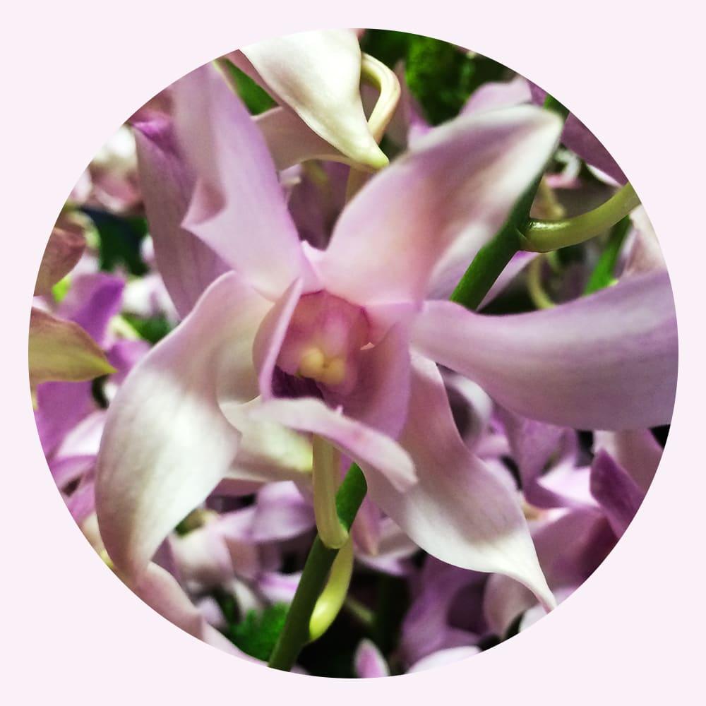 ランの花言葉「優雅」
