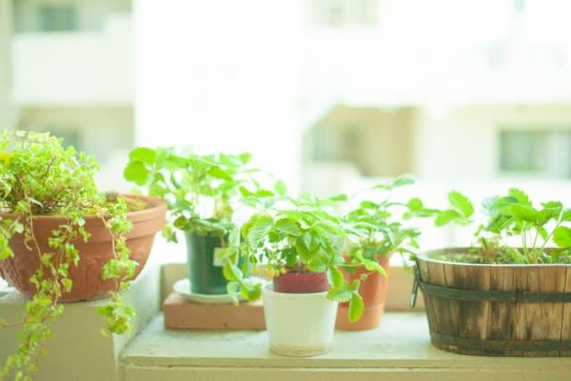 母の日に観葉植物をプレゼントしてみませんか?