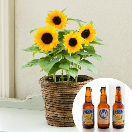 【父の日ギフト】遠野麦酒(ビール)「ZUMONA」&ひまわり鉢植え<br> 5,280円(税込)