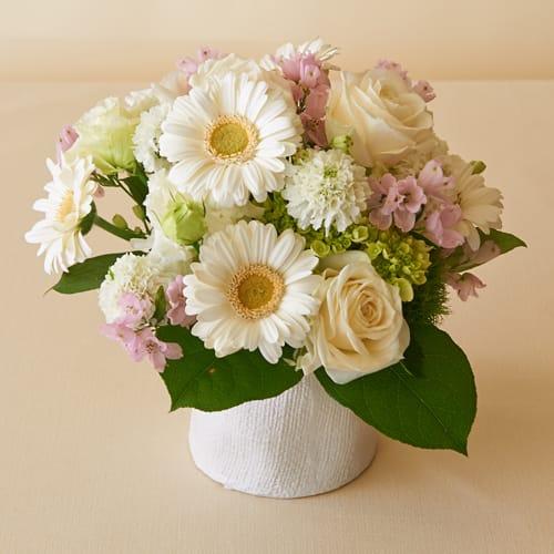 ◆白色のガーベラの花言葉