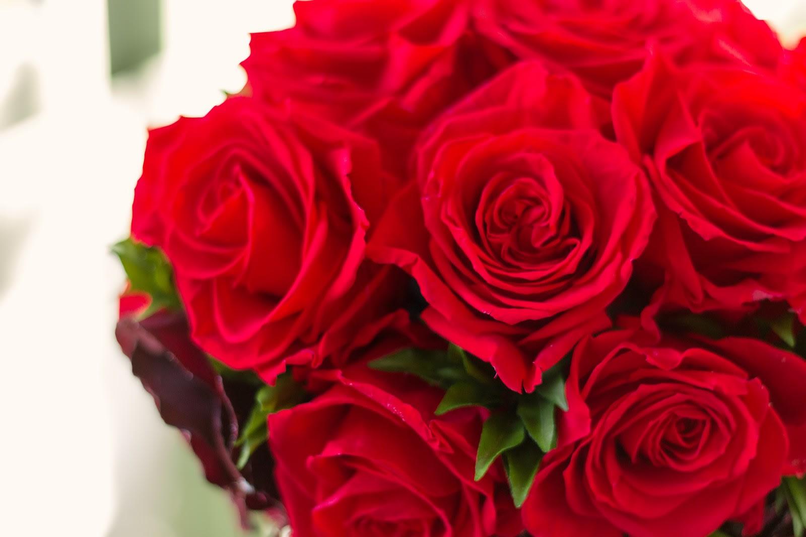 豊富なバラの種類をご紹介!あなたはどんなバラが好き?