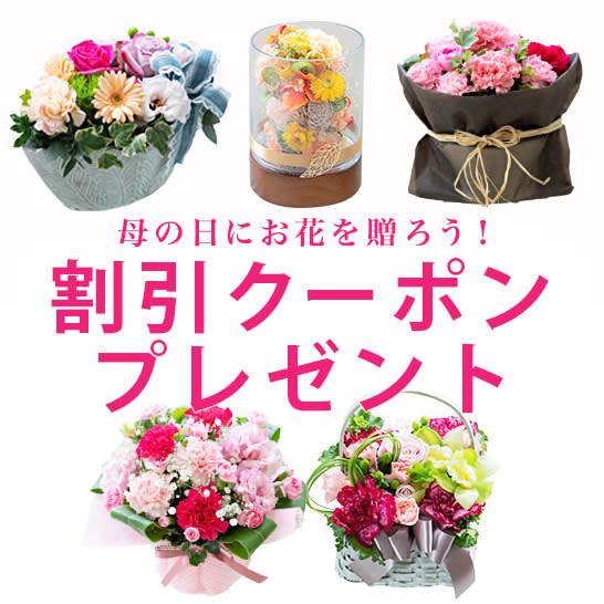 最大800円割引クーポンプレゼント!