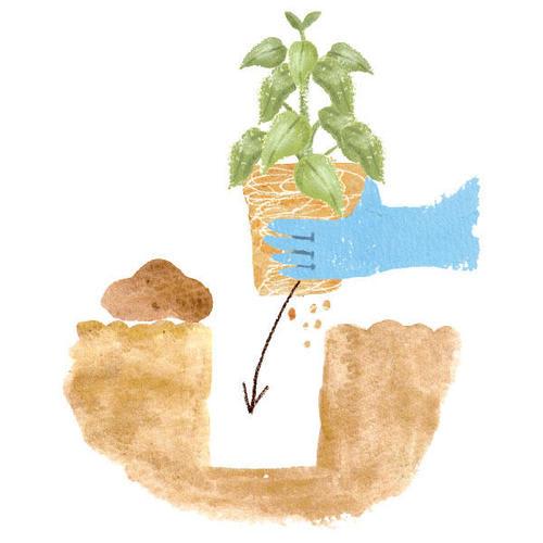 Vol.4|家庭菜園の「苗の植えつけ」