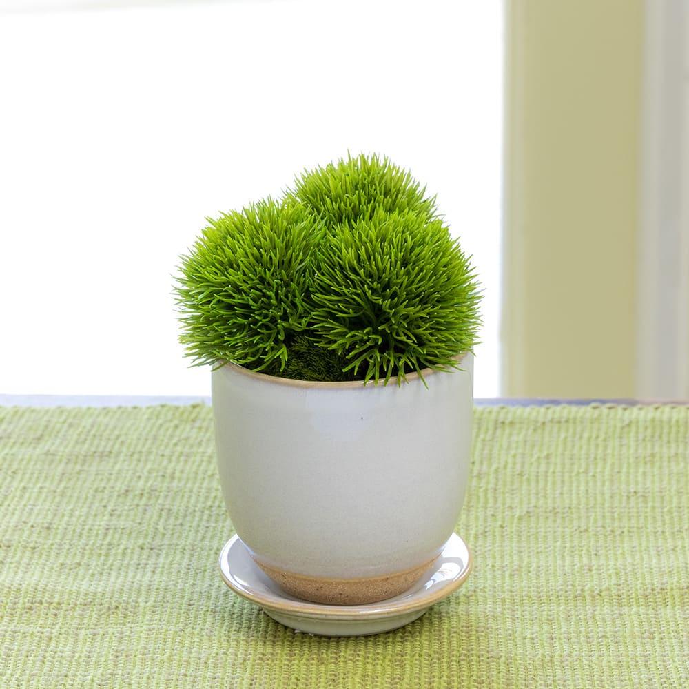 CUPBON 白茶小鉢 マリモ
