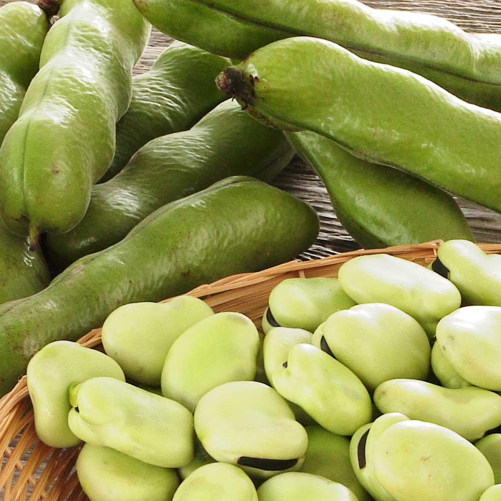 鹿児島県産そら豆 (約2kg)