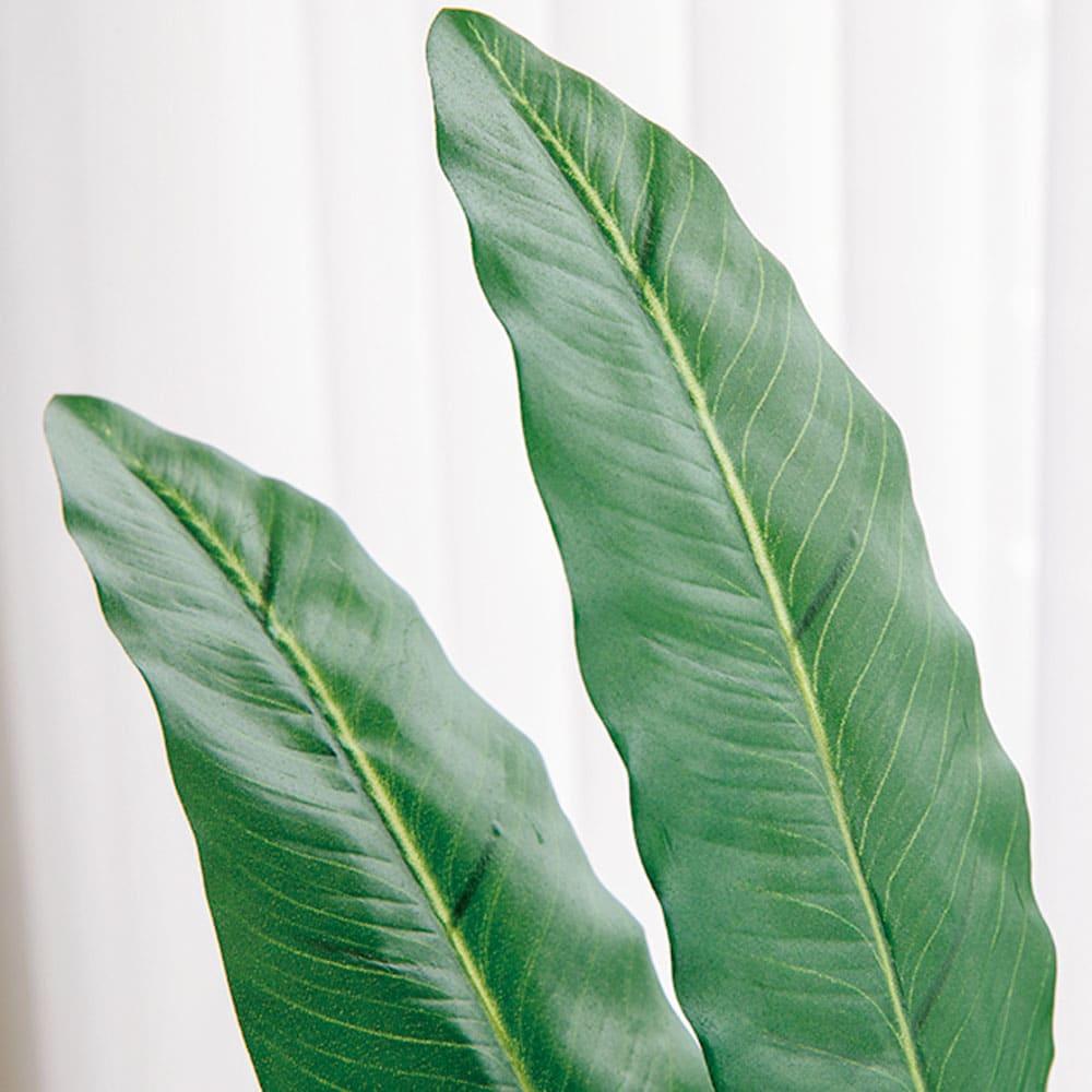 CT触媒インテリアグリーン スマートストレリチア 高さ140cm 縦長のシルエットが特徴的な葉は本物と見紛えるほどのクオリティ。お部屋にスタイリッシュな印象を与えます。