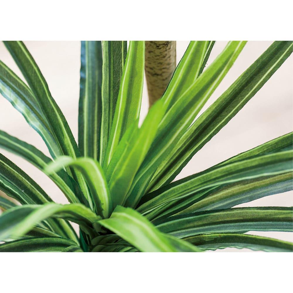 CT触媒インテリアグリーン ドナセラユッカ 高さ132cm グラデーションのある細長い葉がリアル。