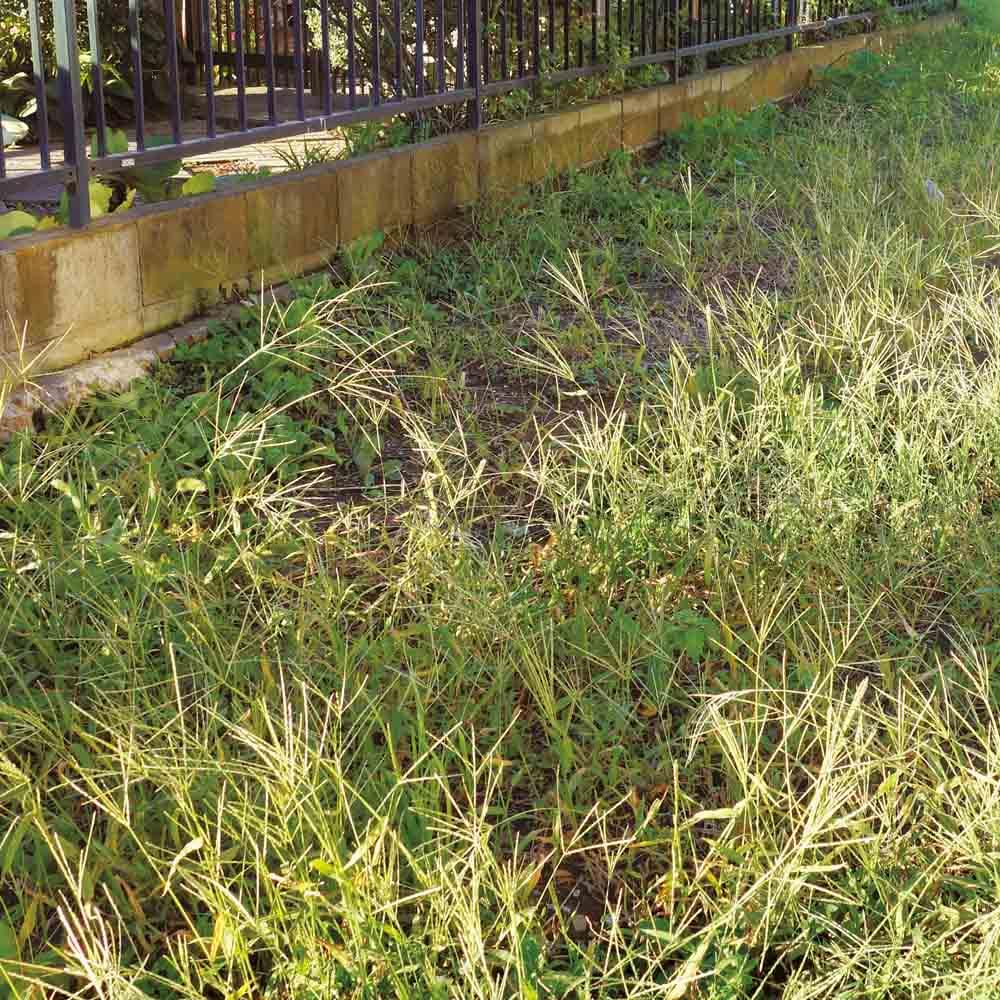 雑草が生えない天然石マット スクエア8枚組 ≪Before≫雑草だらけのスペースを解決! (※写真はイメージです。)