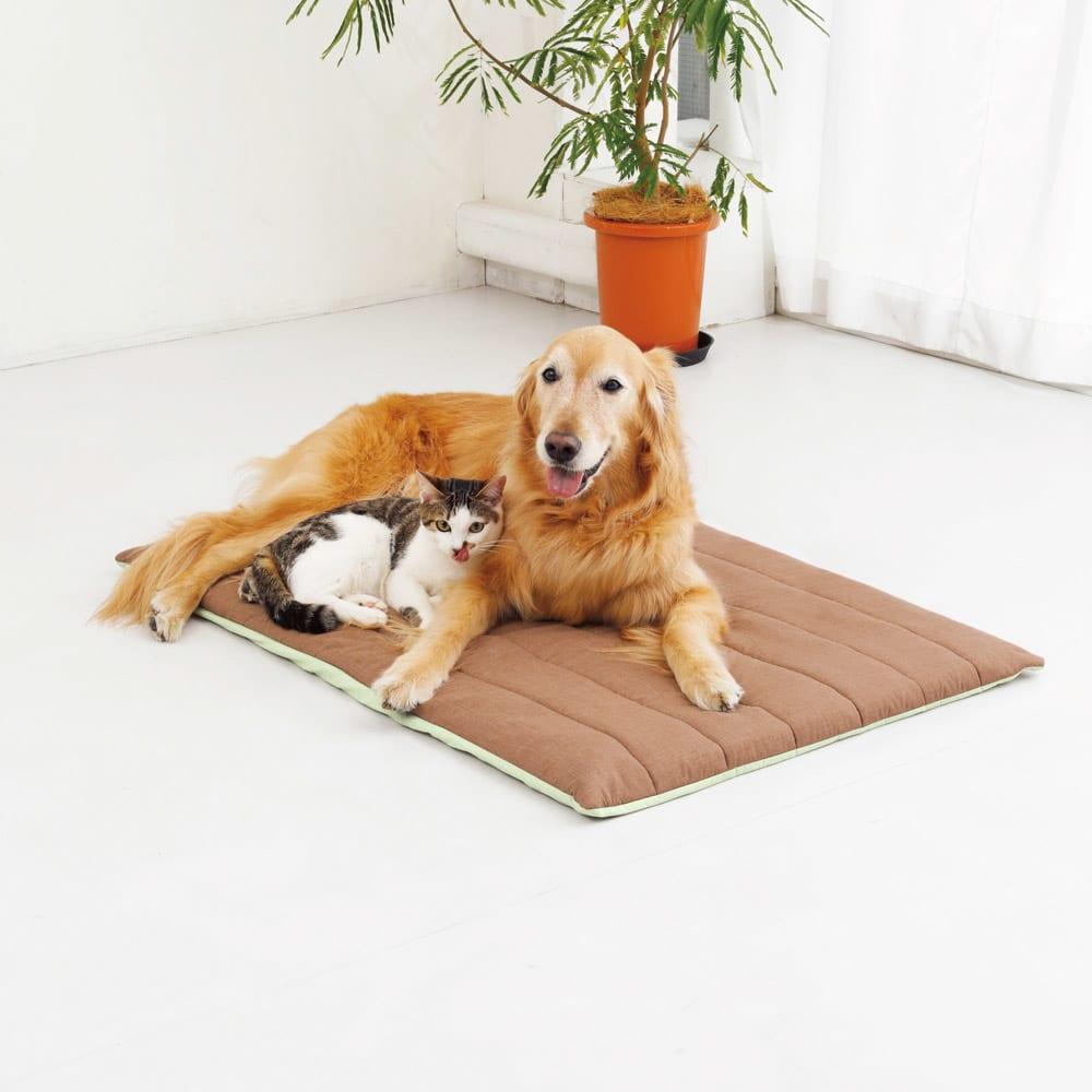 ペットのための敷布団 (あったかカバー付き) 「これ本当におすすめ!! 薄い&軽くて移動もしやすいし、お手入れもラク。我が家ではソファに敷いて使っているのですが、小麦も豆も気持ちよさそうにくつろいでいます。」 ♯小麦7歳 ♯お手入れもラクチン! ♯老犬になった時にもよさそう (画像はMサイズ)
