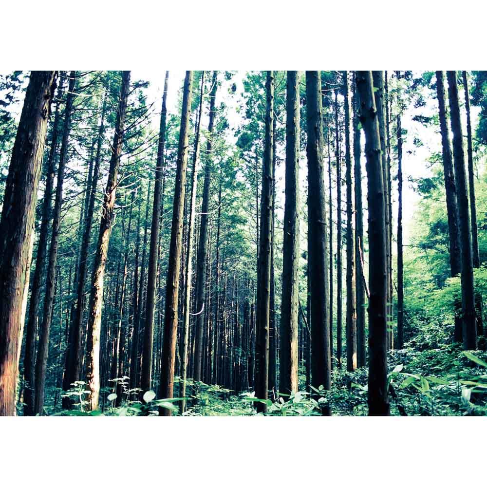 ひのきが香る天然木 親子すのこベッド 下段ベッド 島根・四万十産ひのき天然木の風合いと香りが生きています。