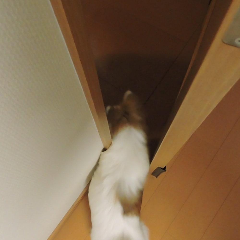 ペット用ドア開閉アイテム「わんにゃんフリーパス」 ドアから外で出ることが出来ます。開いた後のドアはリールがワイヤーを戻す力で自然に閉まります。