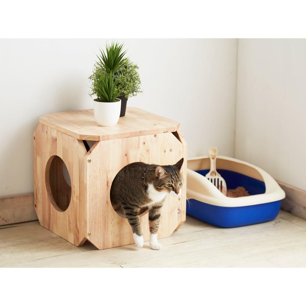 キャトハス ペットベンチ S (ペットと一緒に使える天然木ベンチ) ラバーウッド材の節や木目がやさしいベンチ。中は猫が大好きな隠れ家です。