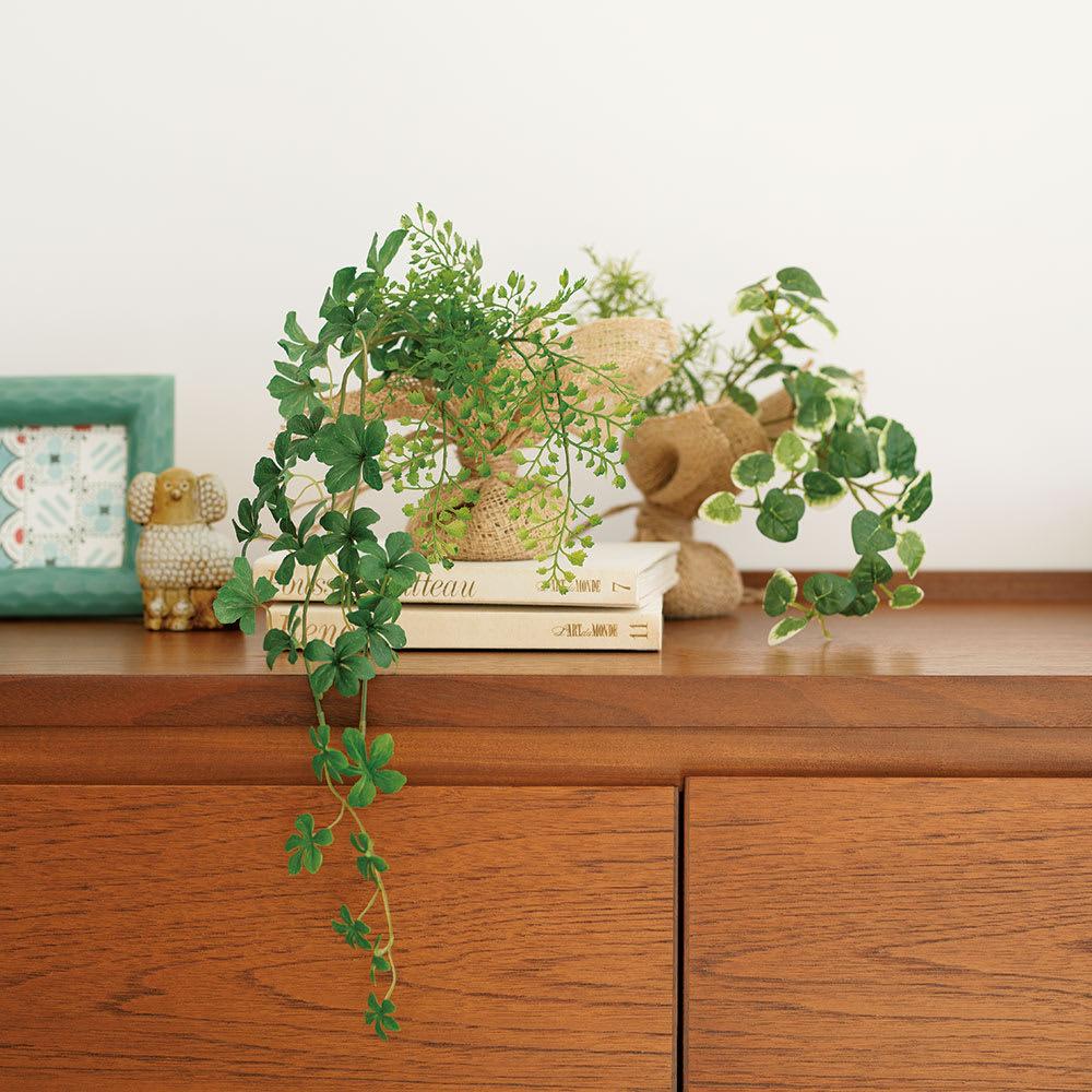 ピンで飾れる消臭グリーン 2種セット 左からシュガーバイン、プミラ