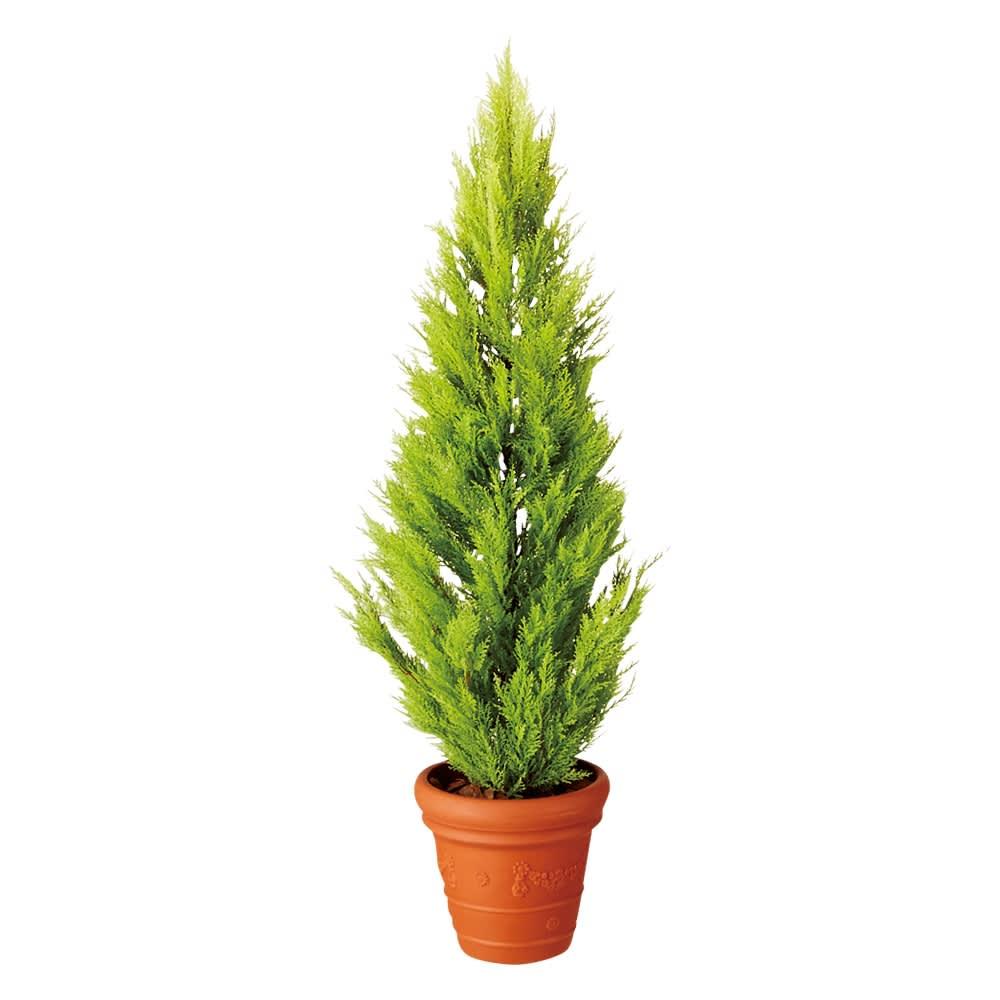 人工観葉植物ゴールドクレスト 高さ160cm お得な2本組
