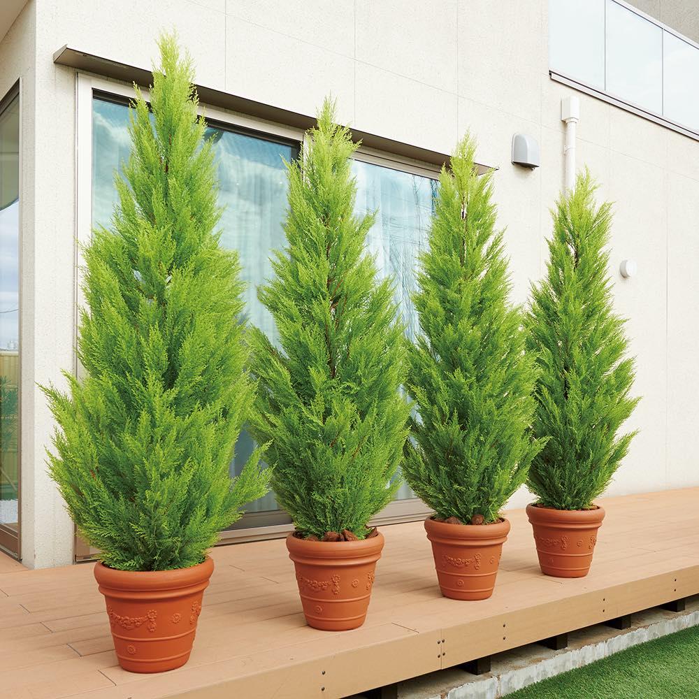 人工観葉植物ゴールドクレスト 高さ160cm お得な2本組 [イメージ] 複数本並べて置けば生け垣風の目隠しにも。※お届けは高さ160cmの商品になります。