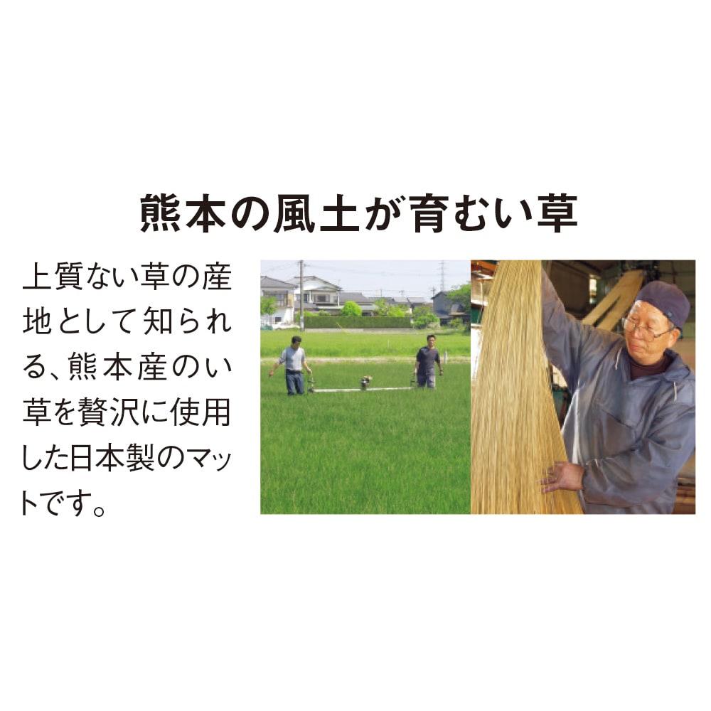 国産い草の5つ折り敷布団マット