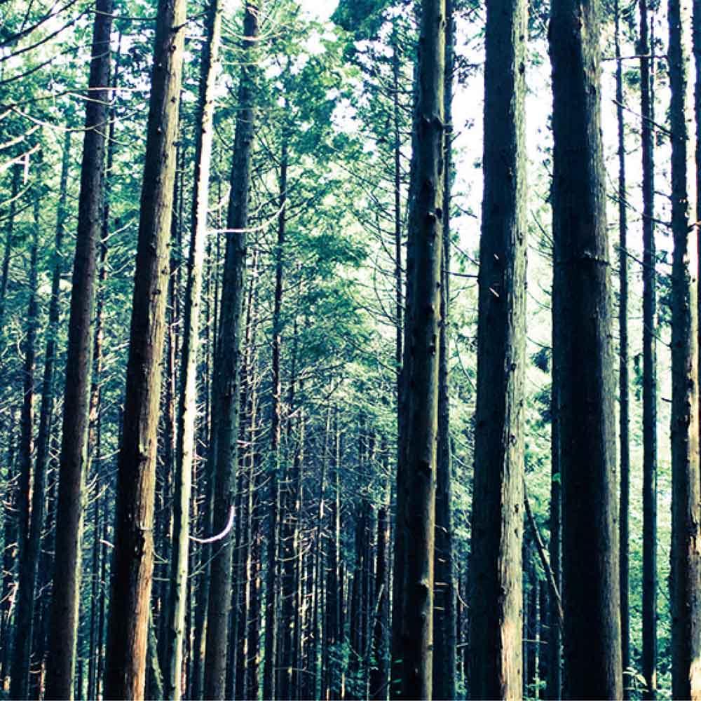 国産ひのき天然木すのこシングルベッド 棚なし(フレームのみ) 島根・四万十産ひのき天然木の風合いと香りが生きています。
