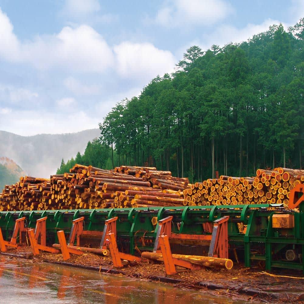 国産杉頑丈突っ張りラック(本棚) 幅119cm奥行22cm 健全な森に蘇らせることを目指して積極的に日本の森林を活用。地に日が当たり、下草が生い茂って保水力が増すとともに、木々に栄養が届きます。日本の森を愛する想いも込められています。