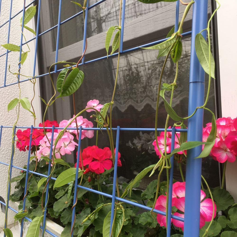 <吉谷桂子さんカラーセレクト商品>アイアンフラワーカーテン 1枚 花が絡んだ様子は家の中から見てもとってもきれい。