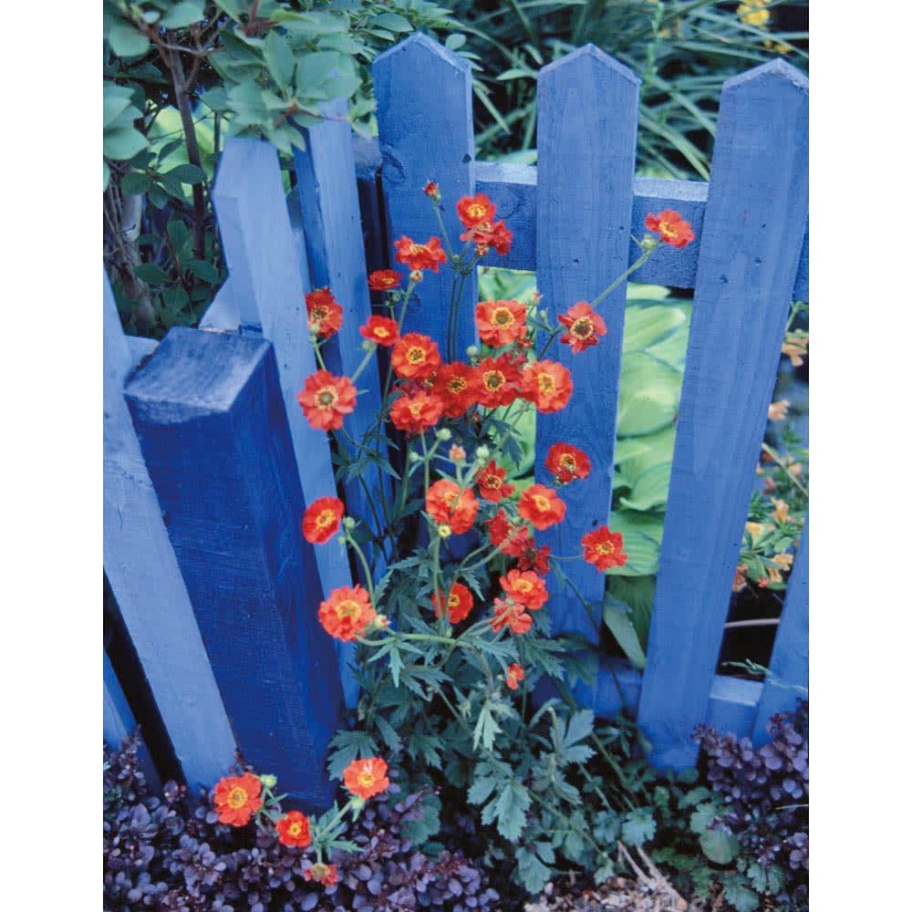 プランター台付ワイド&スーパーハイローズトレリス 2枚 青色の資材は庭に取り入れると花が少なくても華やぎます。