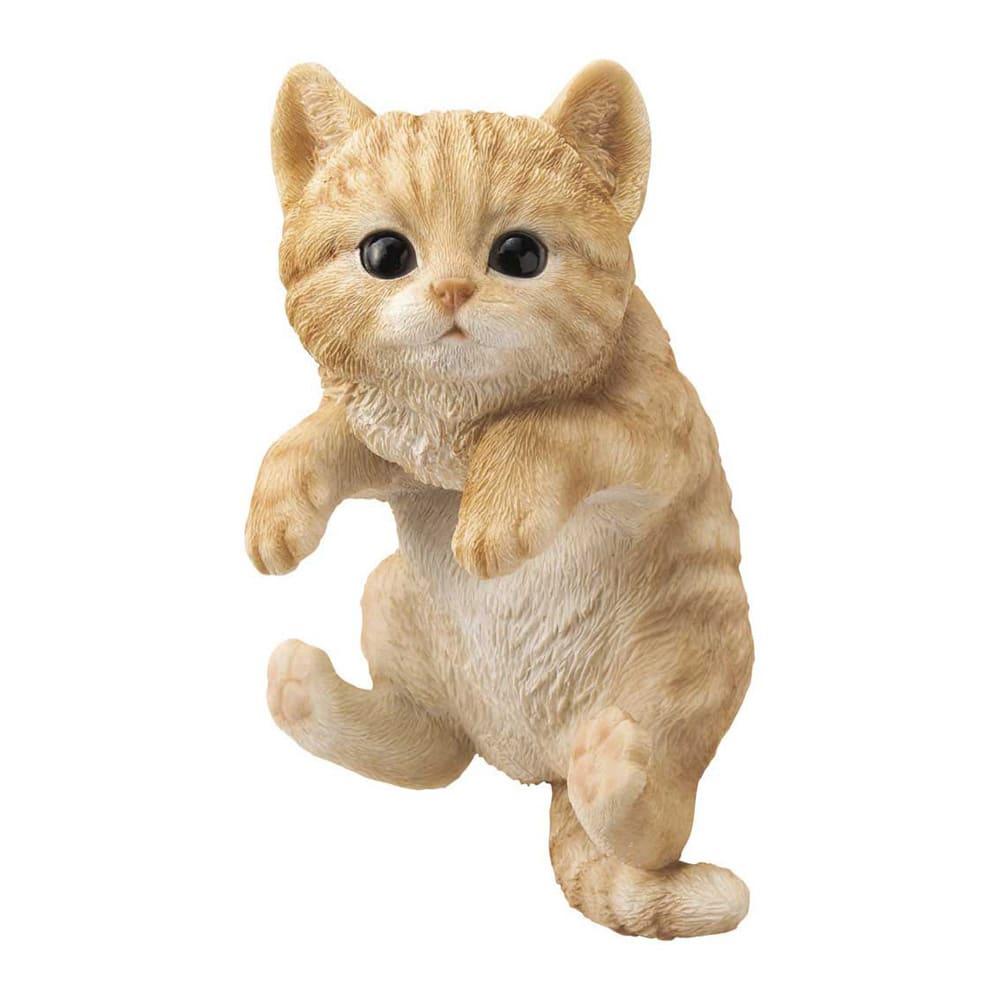 ひっかけ子猫 (ア)茶トラ