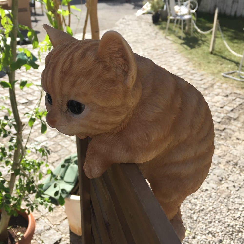 ひっかけ子猫