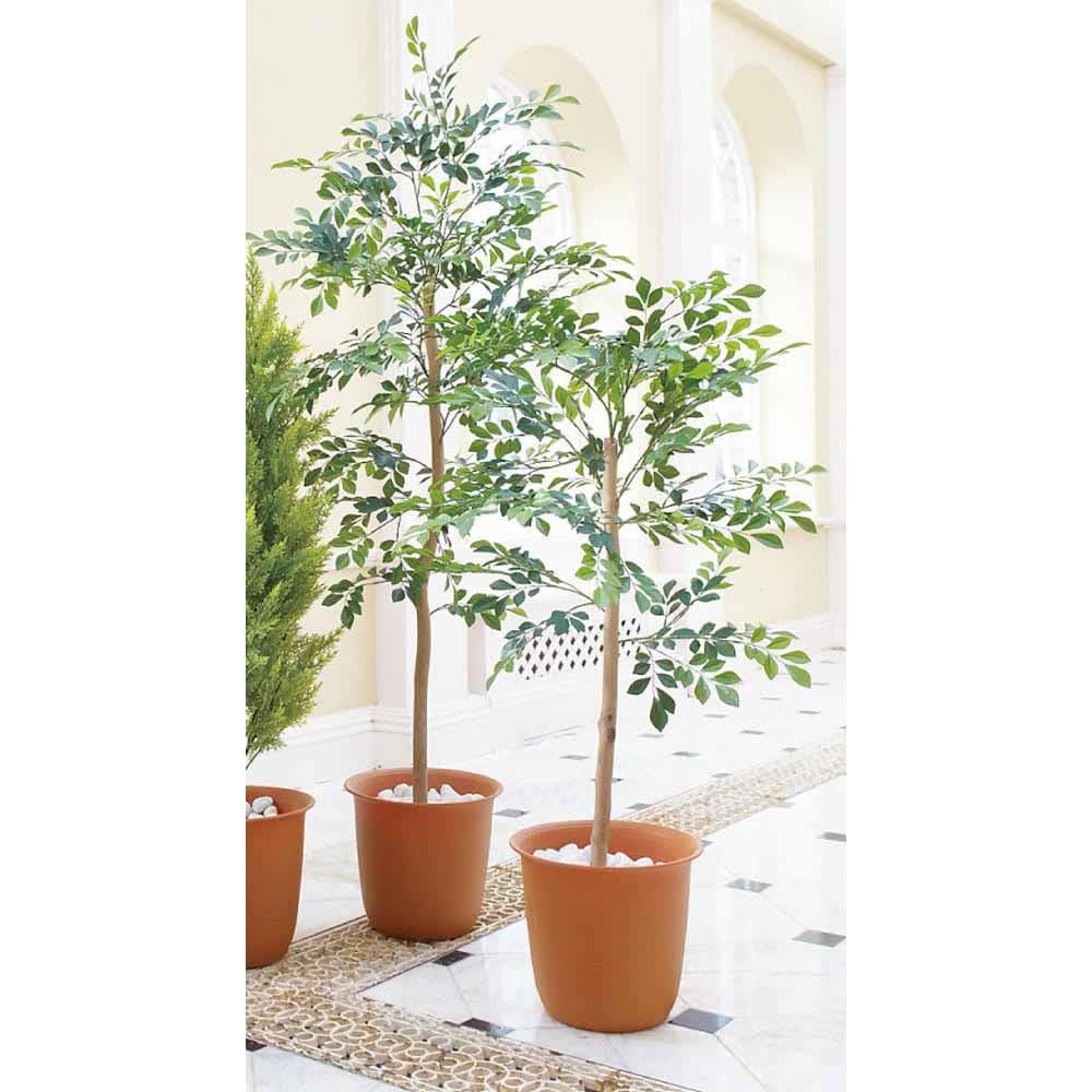 人工観葉植物シマトネリコ ※写真は(左)高さ150cm (右)高さ120cmです。