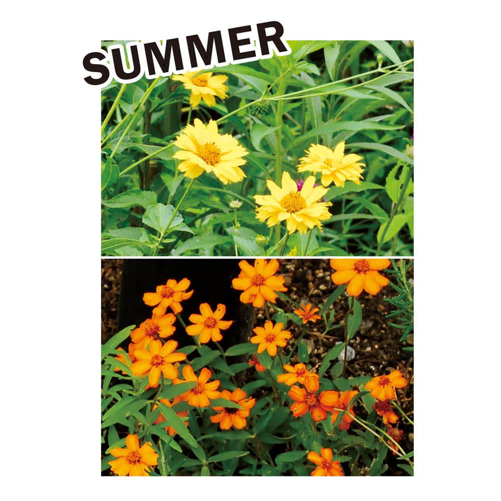 カナダ製ラバーエッジングシリーズ 1段 お得な3個組(幅120cm×3個=360cm分) おすすめのナチュラル植栽コーディネート:草丈があるヘリアンサスをメインに。暑さや乾燥に強いジニア、ペンタスなどもおすすめ。ホスタで瑞々しさを添えて。