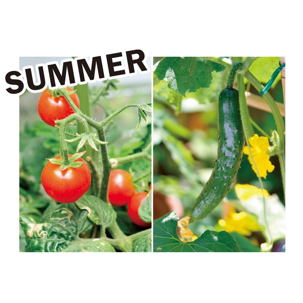 菜園プランター ベジトラグ バルコニーサイズ 季節別にベジトラグにおすすめの植物を紹介します。 夏野菜の代表格トマト、キュウリに細葉がかわいいニンジンを合わせて。害虫対策にマリーゴールドを。