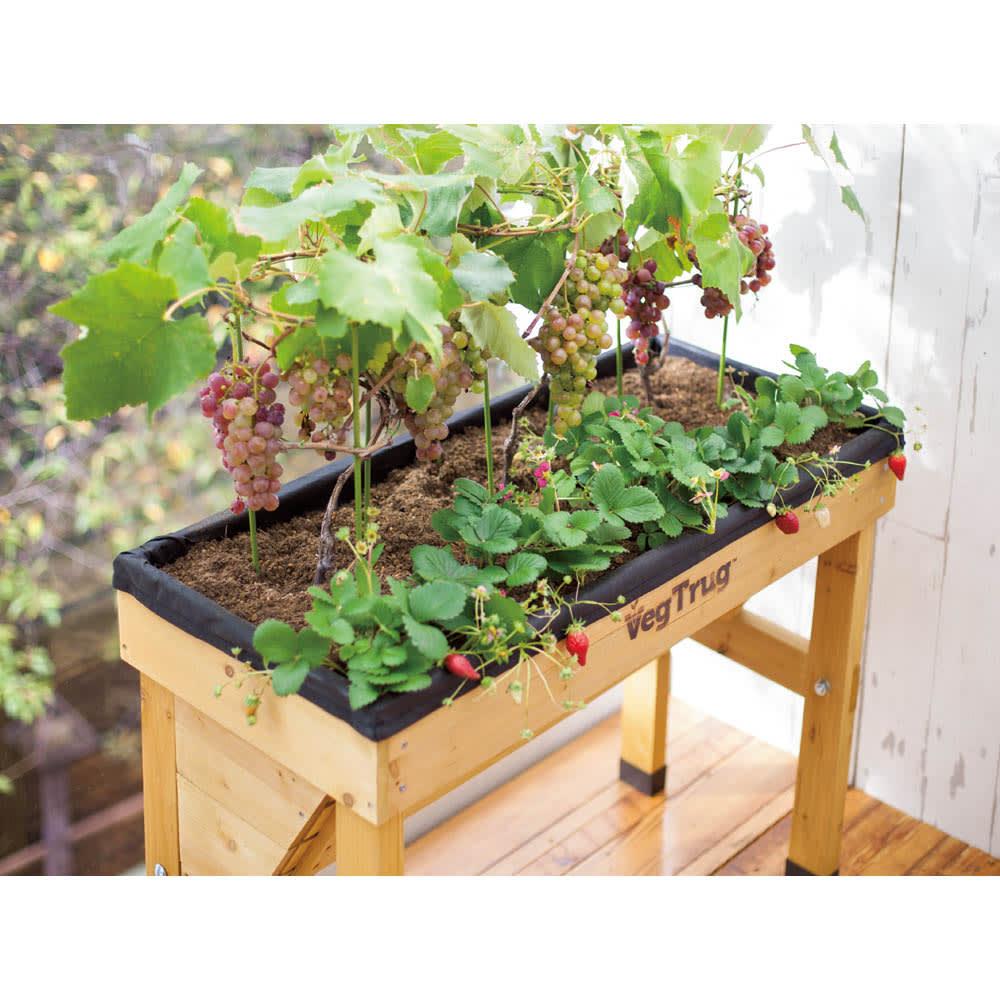菜園プランター ベジトラグ 省スペースサイズS 深さの必要なブドウと浅く根を張るイチゴや、レタスなどの葉ものと、大根やニンジンなどの根菜が同じコンテナ内で一緒に栽培できます。(※写真はSサイズ)