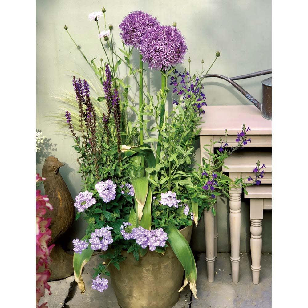 アンティーク風プランターカバー 1個 グレージュ色に合う植栽アイデア グレージュに合わせたいのは大人色の花。紫色や、少しくすんだピンクやアプリコット、チョコレートコスモスやクリスマスローズのような色調に一層の雰囲気を与えてくれます。
