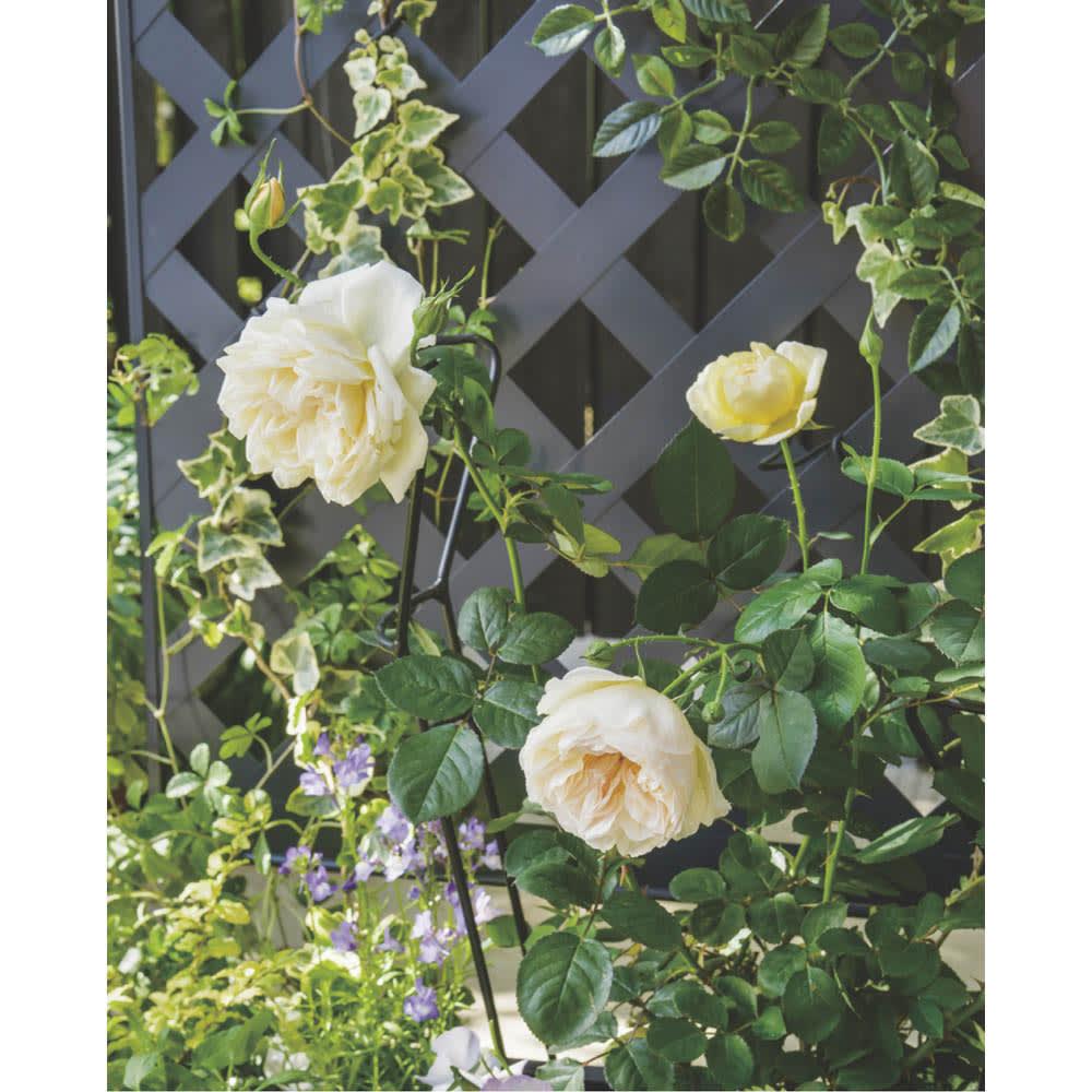 欧風トレリス付きプランターボックス〈ダークグレー〉 高さ161cm クリーム色や白など明るい花色、葉色を選ぶと、お互いのよさを引き立てることができます。
