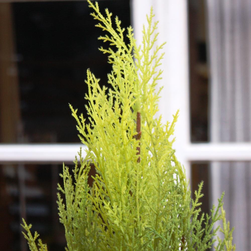 高さ90cm(人工観葉植物ゴールドクレスト)