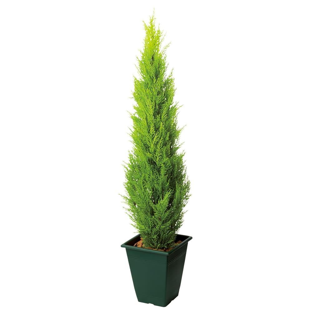 高さ90cm(人工観葉植物ゴールドクレスト) ※写真は高さ120cmタイプです。 ※お届けの鉢のデザインは若干異なります。